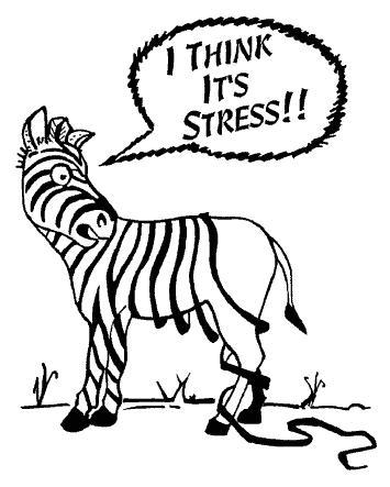 Zebre stressé